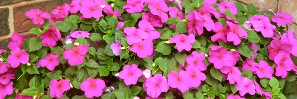Tips before Buying Plants for Sale and Buying Live Plants Online